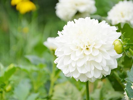 花が咲いている写真