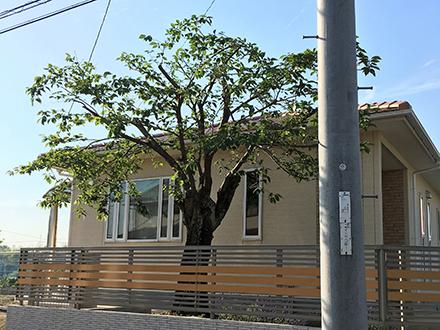 日差し・風通しの管理された庭木の写真