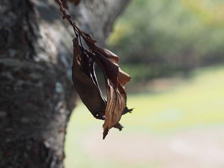 病害虫により庭木が枯れた写真
