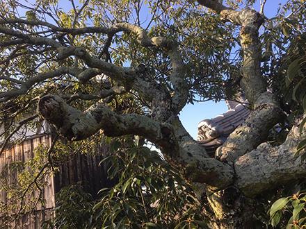 今にも枝が折れそうな庭木の写真