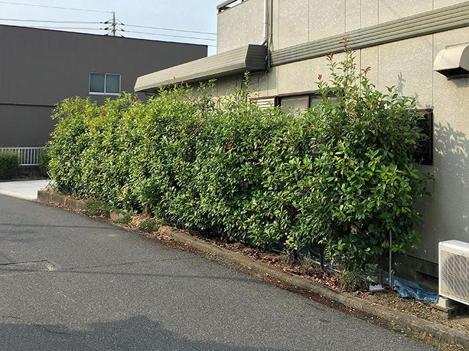 早島町 Y様 生垣の剪定の施工実績Before